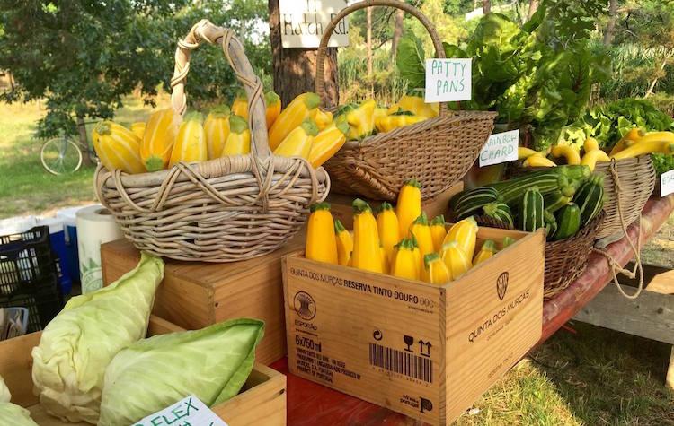 Grow, Make, Eat, and Imbibe — Harvard Alumni Promote the Local Origins of Edible GoodsBy Neil Porter BrownHARVARD MAGAZINE